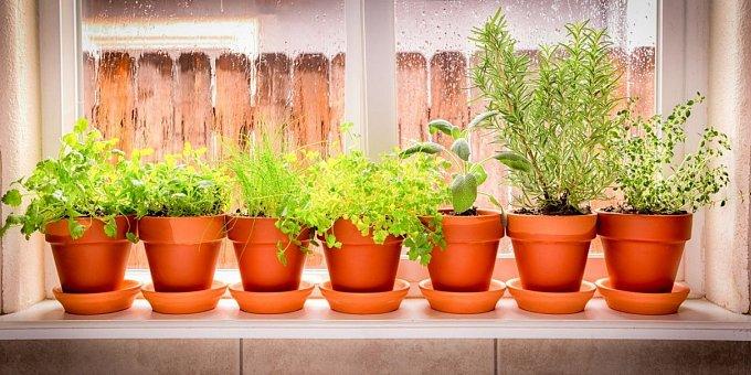 I v zimě můžete pěstovat bylinky. Které přežijí i v bytě?