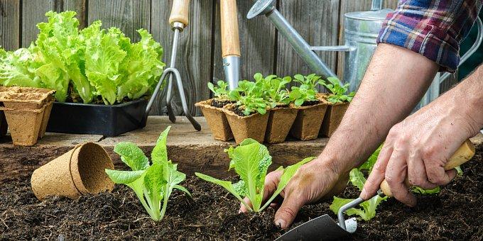 Předpěstujte si rajčata, papriky a okurky. Jak na to?
