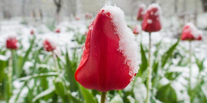 V dubnu se za den i devět druhů počasí sejde. Co říkají pranostiky?