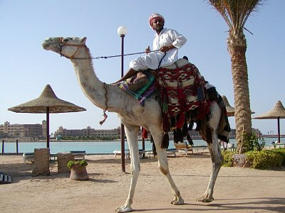 Egypťan na velbloudu
