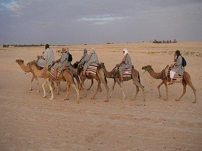 Putování Saharou na velbloudech