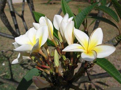 Tropický květ