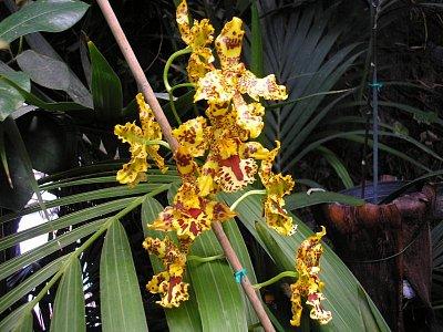 Květina v Tarifa Alta