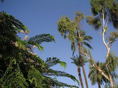 Flóra u pobřeží Nilu (nahrál: admin)