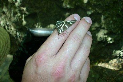 údolí motýlů