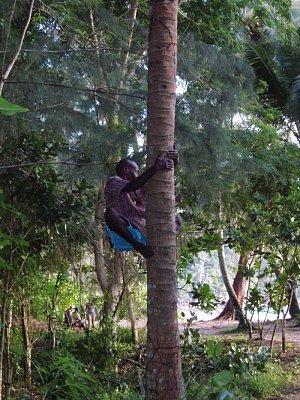 trhači kokosů (nahrál: admin)