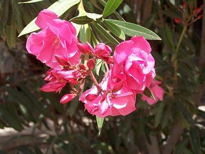 tropický květ (nahrál: admin)