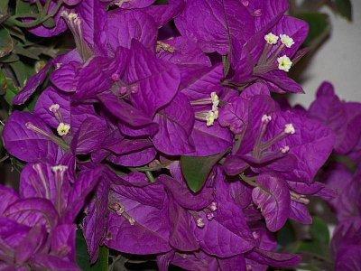 květiny (nahrál: admin)