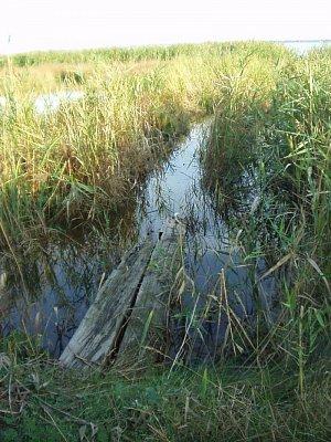 voda a rákosí v okolí Montpellier (nahrál: admin)
