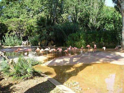zoo pelikani BCN (nahrál: denisa )