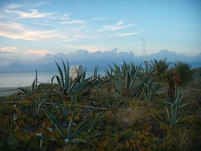 Acharavi-u pláže - kaktusy (nahrál: Jana Náplavová  )