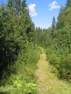 Lesy (nahrál: admin)