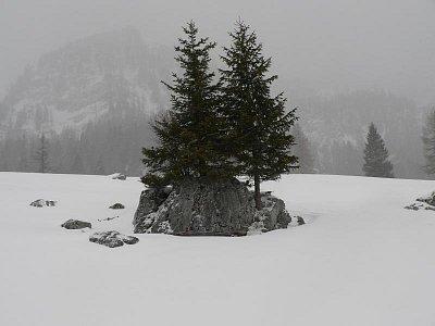 odolné dřeviny v horském prostředí (nahrál: admin)