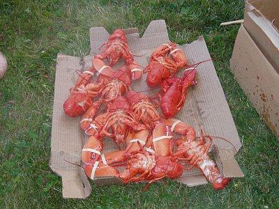 Lobsters (nahrál: admin)