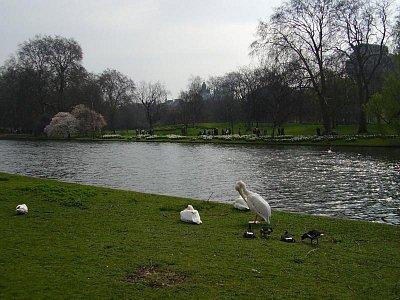 St.James Park (nahrál: Jechort)