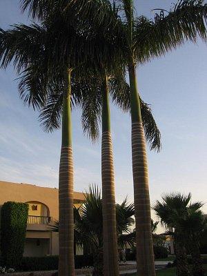 Krásné palmy (nahrál: Libuše Appeltová)