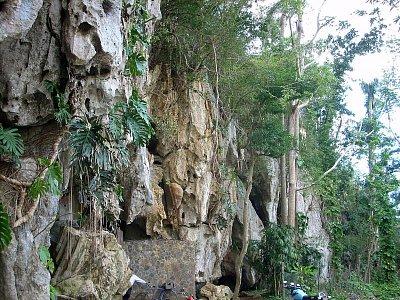 Viňáles - vegatace na mogodě u východu z jeskyně (nahrál: best)