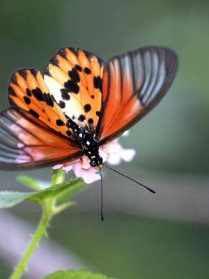 Madagaskar 2008/9