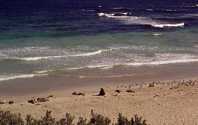 Seal Bay - Pohled z příchozí lávky (nahrál: Luboš)