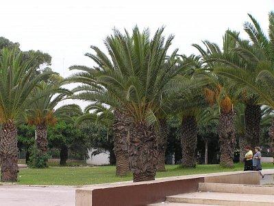 Park v Marakeši (nahrál: Malíková Margita)