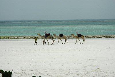 Diani pláž (nahrál: Jarmila Macháčková)