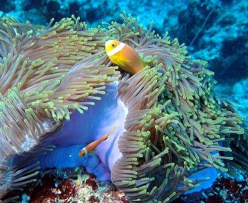 Maledivy 2011 ostatní verbež