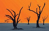 Namibie: Horké stíny africké pouště
