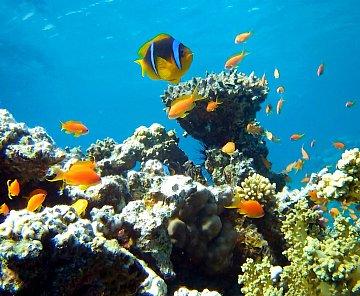 Vzpomínka na Rudé moře