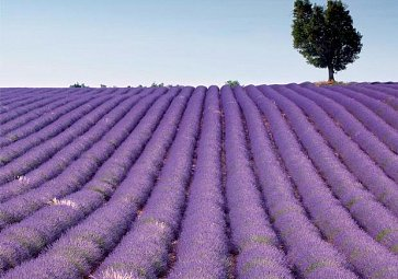 Kraj plný sluníčka - Provence