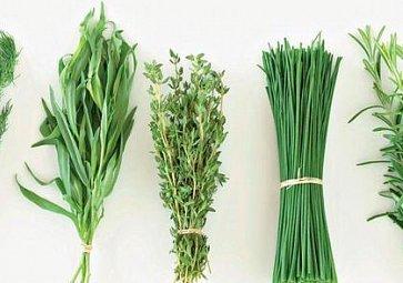 Zelené bylinky na jarním stole