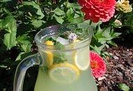Bylinkovo-okurkový nápoj