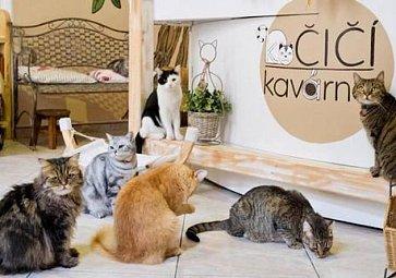 Kočičí kavárny: Místo, kde vám u kávy bude vrnět kočka