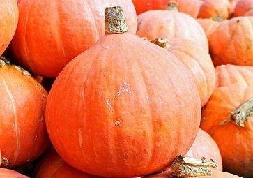Listopadová úroda: 5 nejlepších sezónních potravin
