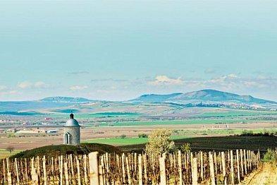 Sauvignon blanc - vítězná cesta vína od 49. rovnoběžky